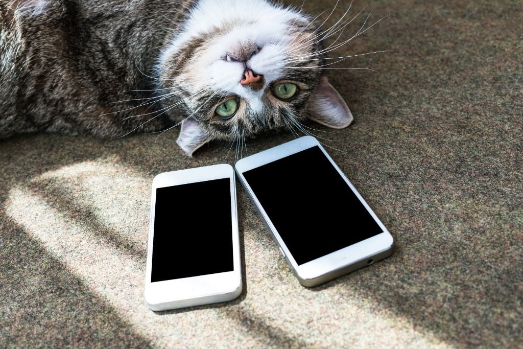 Top Smartphone Apps For Playing With Your Cat